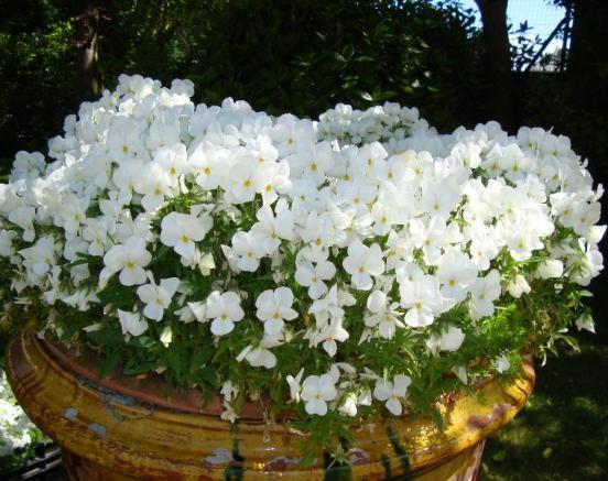 Prestation - fleurissement
